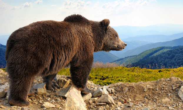 Our monthly research roundup – the bear bites back?