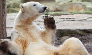 Bear growls as global economy slows